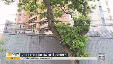 Ocorrências de queda de árvores são comuns no período chuvoso em BH - Saiba quem acionar para solicitar podas e supressão de árvores.