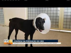 Canil municipal de Caratinga já está em funcionamento - Local recolhe animais em situação de rua.