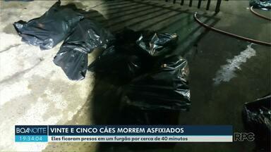 Cães morrem asfixiados durante transporte, em Londrina - Durante o trajeto o furgão que carregava 27 cães quebrou e os animais ficaram presos sem ventilação. Vinte e cinco acabaram morrendo.