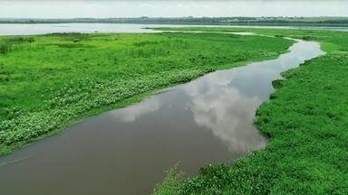 Pantaninho é um pedaço do pantanal no interior de São Paulo - O local reserva uma planície alagada cheia de belezas naturais.