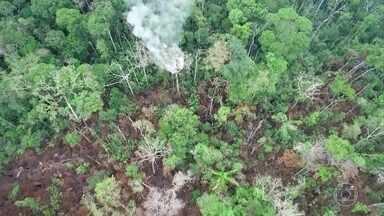 Projetos de proteção da Amazônia estão parados por falta de dinheiro - Verbas não foram repassadas desde a suspensão do Fundo Amazônia