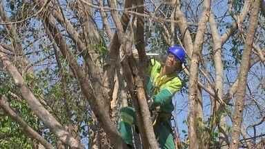 Prefeitura fez quase 15 mil podas de árvores que apresentavam perigo em Jundiaí em 2019 - Em Jundiaí (SP), no ano passado, a prefeitura fez quase 15 mil podas de árvores que estavam apresentando perigo.