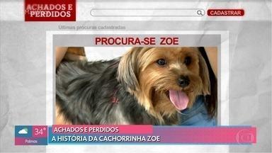 Conheça a história da cachorrinha Zoe - Após sumir a dona da Zoe pediu ajuda através de grupos na internet