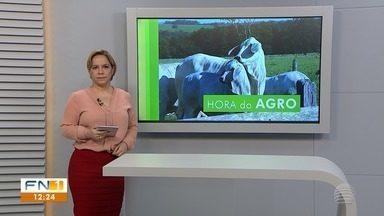 Confira os destaques do noticiário rural na região de Presidente Prudente - Mês chuvoso de janeiro anima pecuaristas.
