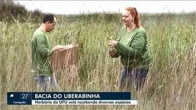 ONG em Uberlândia e Instituto da UFU fazem estudo da flora na bacia do Rio Uberabinha - Trabalho começou em 2015 e já foram coletadas 500 amostras de 350 espécies diferentes. Todo material será encaminhado ao herbário da universidade.