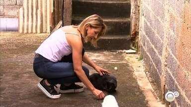 Casos de envenenamento preocupam donos de gatos em bairro de Jundiaí - No Jardim Santa Gertrudes, em Jundiaí (SP), os donos de gatos estão preocupados. Muitos animais têm sido mortos por envenenamento.