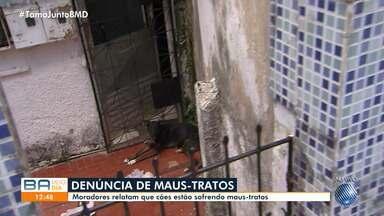 Moradores da Ladeira da Fonte da Telha, em Salvador, reclamam de maus tratos a animais - As pessoas relatam que cachorros da localidade estão sendo mal tratados.