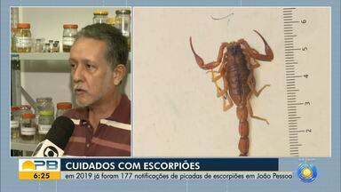 Saiba os cuidados com escorpiões e como se precaver - Confira os detalhes na reportagem de Giuliano Roque.