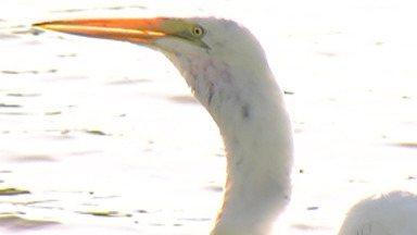 Pássaros que vivem no Parque Centenário são atrações para visitantes em Mogi - No parque há como estar em contato com a natureza e conhecer os animais que estão a todo o tempo no local.