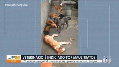 Veterinário é indiciado por maus-tratos de animais em Goiás - Cerca de 70 animais foram resgatados e ainda se recuperam em novos abrigos.