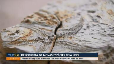 Fósseis de milhões de anos são descobertos por pesquisadores da UFPR - Serpente e Estrela do Mar foram encontradas nos Campos Gerais.