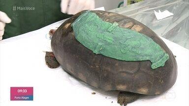 Próteses feitas em impressoras 3D recuperam animais mutilados - Conheça o procedimento feito em um jabuti no Rio de Janeiro e em dois tucanos que tinham problemas sérios em São Paulo