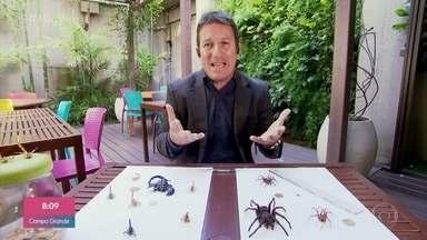 Biólogo fala sobre aranha que apareceu na Casa de Vidro - Randy Baldresca diz que aranha armadeira é uma das espécies mais venenosas do mundo e se alimenta de mosquitos e baratas