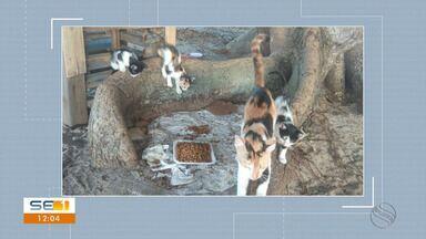 Polícia investiga morte de gatos no Parque Augusto Franco - Polícia investiga morte de gatos no Parque Augusto Franco.