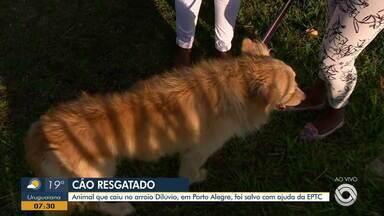 Cachorro que caiu no arroio Dilúvio é salvo com ajuda da EPTC - Animal foi resgatado, encaminhar do veterinário e devolvido à dona.