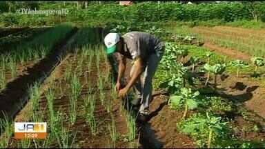 Ministério da Agricultura libera selo para produtores em Araguaína - Ministério da Agricultura libera selo para produtores em Araguaína