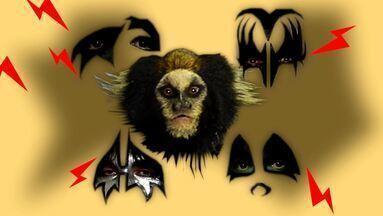 Música incentiva conservação de sagui ameaçado - Rock é estilo que predomina na melodia e faz referência à aparência do sagui-da-serra-escuro.