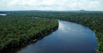 Assista ao programa Terra da Gente deste sábado (29/02) - Projeto para salvar as veredas do Norte de Minas Gerais, videogame sobre a conservação do macaco aurita e pescaria no rio São Benedito são alguns destaques.
