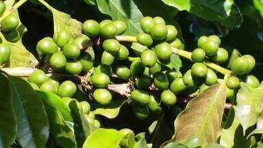 Fenicafé reúne cafeicultores no Triângulo Mineiro - Evento começa na terça-feira (17), em Araguari.