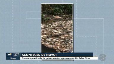 Grande quantidade de peixes foram encontrados neste fim de semana, no Rio Teles Pires - Grande quantidade de peixes foram encontrados neste fim de semana, no Rio Teles Pires