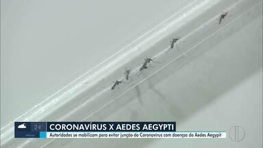 Aumenta preocupação com doenças transmitidas pelo Aedes aegypti em Campos, no RJ - Cidade está em seu mais alto grau de proliferação do mosquito.