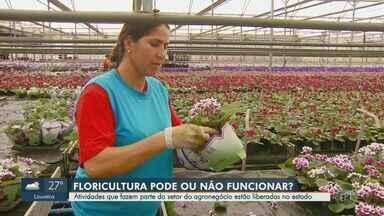 Governo do estado autoriza funcionamento de floriculturas na quarentena - Atividades que fazem parte do setor do agronegócio estão liberadas no estado de São Paulo e, por consequência, floriculturas podem permanecer abertas.