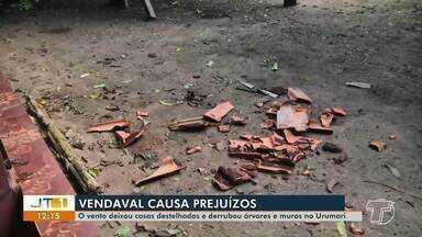 Chuva e vento forte destelham casas e derrubam árvores no bairro Urumari, em Santarém - Temporal aconteceu na madrugada desta quarta-feira (6). Seminfra foi acionada para dar apoio aos moradores.