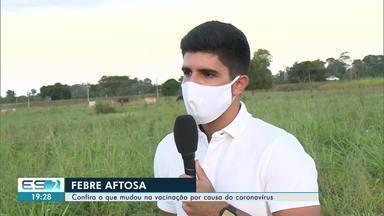 Começou a campanha de vacinação contra a febre aftosa no norte do ES - Bois e búfalos devem ser vacinados.