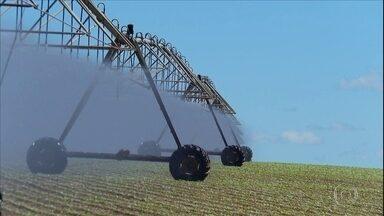 Irrigação ajuda produtores a aprimorar cultivo do feijão - Tecnologia é utilizada no combate à seca e proporciona qualidade ao alimento