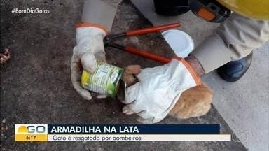 Gato é resgatado após ficar com a cabeça presa dentro de lata de milho, em Goianésia - Animal foi salvo pelos bombeiros e entregue sem ferimentos aos donos.