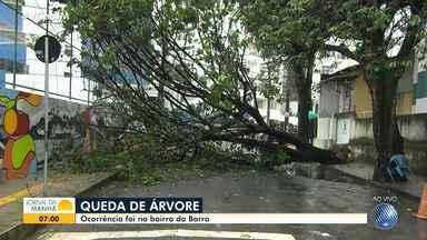 Chuva forte causa queda de árvores em diferentes pontos de Salvador - Situação foi registrada nas regiões da Barra e do Calabetão.