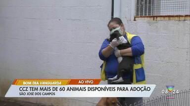 CCZ de São José tem mais de 60 animais para adoção - Feiras de adoção foram suspensas por causa da pandemia.