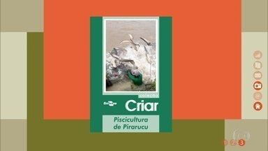 Aprenda a fazer uma criação de pirarucu - Publicação da Embrapa traz dicas de manejo e comercialização deste peixe nativo da Amazônia.