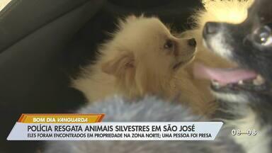 Homem é preso por maus tratos a animais em São José dos Campos - Polícia apreendeu 24 animais com o homem, entre araras, cavalos e cães. Ele vai responder por maus tratos, além de manter animais silvestres sem licença.