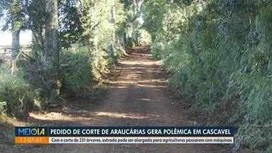Pedido de corte de araucárias gera polêmica em Cascavel - Com o corte de 231 árvores, estrada pode ser alargada para agricultores passarem com máquinas.