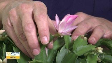 Flores de Maio no Quadro Verde - Manda um vídeo para o nosso whatsapp para participar do quadro na semana que vem.