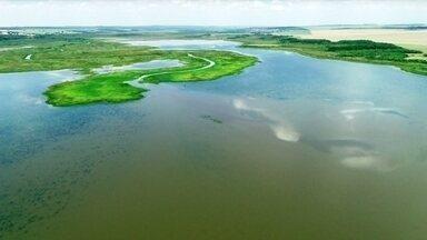 São Paulo tem Pantanal para chamar de seu - A beleza do Pantaninho impressiona até quem há muito tempo está habituado com o visual. É o caso de Massud Abuzgaib Filho, aposentado que há 20 anos mora perto da área de preservação.