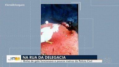 Polícia encontra casa usada para promover rinha de galos, em Bela Vista de Goiás - Segundo a polícia, mais de 40 aves foram encontradas. As rinhas eram marcadas por aplicativo de mensagens.