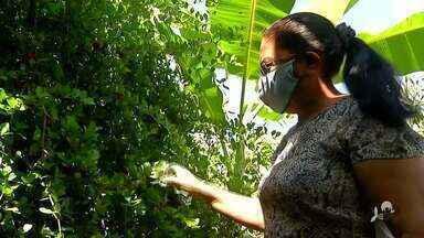 Num assentamento de Canindé, produtores produzem frutas, feijão e criam animais - Saiba mais no g1.com.br/ce