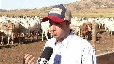Produtores fazem confinamento de gado para suportar o período de seca na região - Confira as dicas do especialista e as técnicas que são utilizadas.