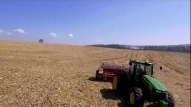 Falta de chuva afeta o plantio do trigo no Paraná - Mesmo assim, se clima colaborar, produção deve ser maior do que em 2019.