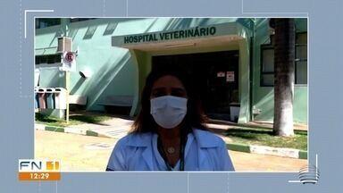 Trabalhos nos pet shops e clínicas veterinárias continuam durante a pandemia - Série Humanizar traz relatos daqueles que atuam nestas áreas.