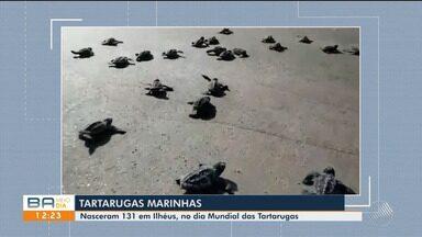 No Dia Mundial da Tartaruga, 130 delas nascem em praia de Ilhéus, no sul da Bahia - O registro foi feito no sábado (23), na praia da Avenida.