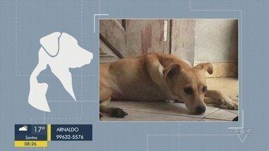 Quatro 'É o bicho' mostra animais que estão perdidos e esperando por adoção - Cachorrinhos estão a procura de um novo dono.