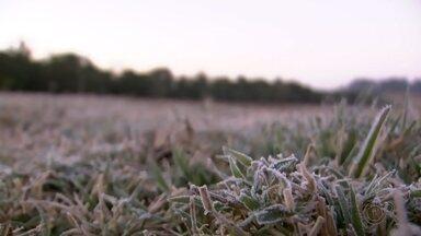 Queda de temperatura leva preocupação a produtores rurais em Botucatu - A região de Botucatu registrou nesta quinta-feira (28) a manhã mais fria do ano, inclusive com registro de geada na área rural. O fenômeno natural é bonito de se ver, mas preocupa os produtores rurais.