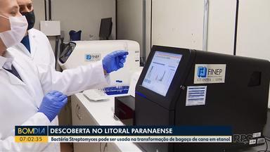 Pesquisadores descobrem bactérias que pode ajudar na fabricação de etanol - Bactéria Streptomyces pode ser usada na transformação de bagaço de cana em etanol.