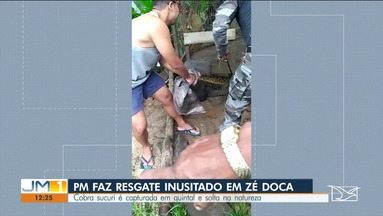 Policia Militar realiza regaste inusitado em Zé Doca - Policiais resgataram uma sucuri, que estava no quintal de uma casa.