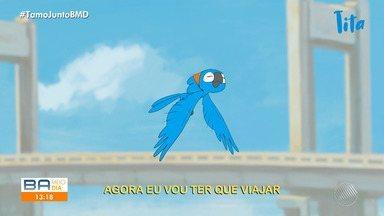 Bahia Meio Dia Salvador Ativista Ambiental Cria Desenho Animado Sobre Uma Menina Transformada Em Ararinha Azul Globoplay