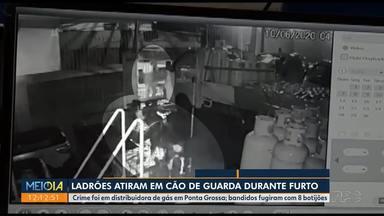 Bandidos atiram em cachorro durante assalto - Crime foi numa distribuidora de gás em Ponta Grossa