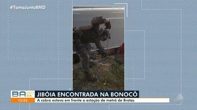 Cobra é resgatada na Av. Bonocô, em frente a estação de metrô de Brotas, em Salvador - Confira.